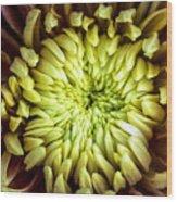Tropical Flower 13 Wood Print
