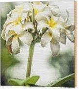 Tropical Flower 7 Wood Print