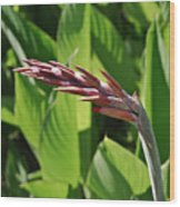 Tropical Flower Buds Wood Print