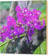 Tropical Flowers Of Costa Rica Wood Print