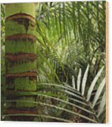 Tropical Forest Jungle Wood Print
