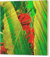 Tropical Fusion Wood Print