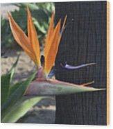 Tropical Garden Photo Of A Bird Of Paradise  Wood Print