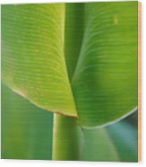 Tropical Green Wood Print