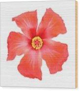 Tropical Hibiscus Flower Vector Wood Print
