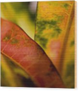 Tropical Leaf Abstract Wood Print
