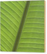 Tropical Leaf Detail Wood Print