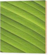 Tropical Leaf Patterns Wood Print
