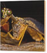 Tropical Mantispid Wood Print