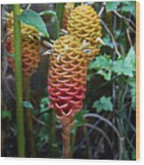 Tropical Mystery Plant Wood Print