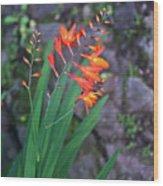 Tropical Orange Lily Wood Print