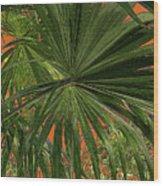 Tropical Palms 1 Wood Print