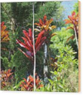 Tropical Plant In Garden Of Eden Wood Print