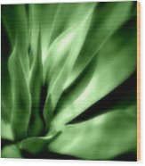 Tropical Plant Wood Print