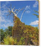 Tropical Plants In A Preserve In Florida Wood Print