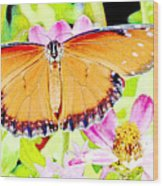 Tropical Queen Butterfly, Soldier Butterfly Wood Print