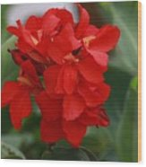 Tropical Red Canna Lilly Wood Print