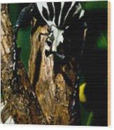 Tropical Scarab Wood Print