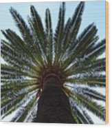 Tropical Summer Palm Tree Wood Print