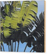 Tropical Sunlight And Shadow Wood Print