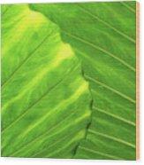 Tropical Vibrant Green Wood Print