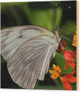 Tropical White Butterfly Wood Print by April Wietrecki Green