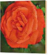 Tropicana  Rose Wood Print