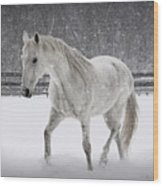 Trot In The Snow Wood Print