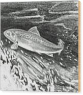 Trout II Wood Print