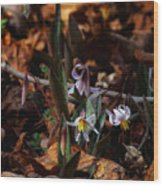 Trout Lillie In Lost Valley Wood Print