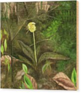 Trout Lily Wood Print