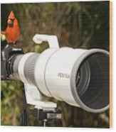 True Bird Photographer Wood Print