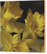 Trumpet Daffodils Wood Print