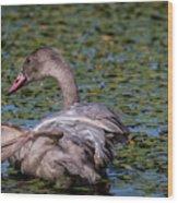 Trumpeter Swan Foot Wave Wood Print