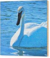 Trumpeter Swan Impressions Wood Print