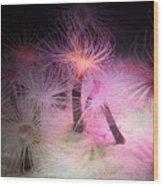 Tube Anemone Wood Print