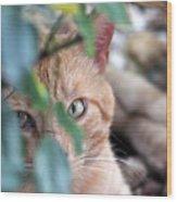 Tucker - The Cat Wood Print