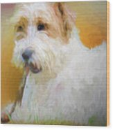 Tuffy The Russell Terrier Wood Print