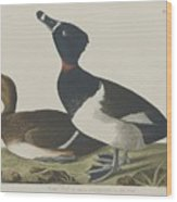 Tufted Duck Wood Print