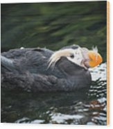 Tufted Puffin Wood Print