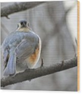 Tufted Titmouse 02 Wood Print