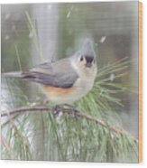 Tufted Titmouse - A Winter Delight Wood Print