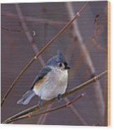 Tufted Titmouse In Winter Wood Print