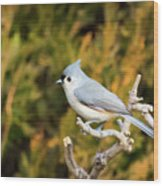 Tufted Titmouse On A Branch Wood Print