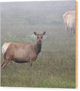 Tule Elk In Fog Wood Print