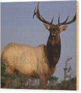 Tule Elk - Tomales Point Wood Print