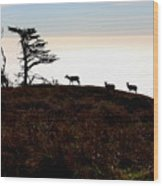 Tule Elks Of Tomales Bay Wood Print