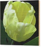 Tulip 0755 Wood Print