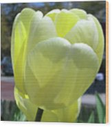 Tulip 0761 Wood Print