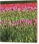 Tulip-1 Wood Print